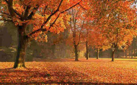autunno poesie autori famosi