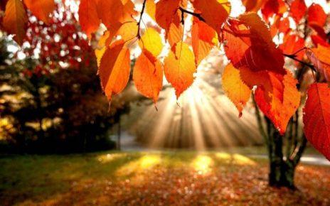 frasi sull autunno