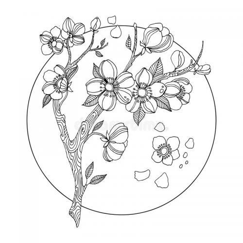 albero ciliego