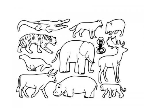 animaletti disegnare
