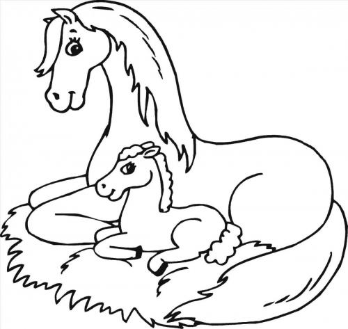 animali cavalli
