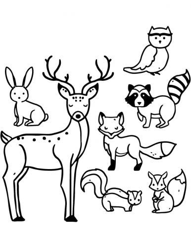 animali colorare