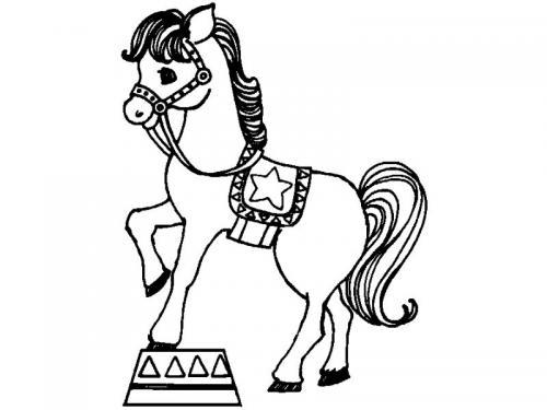 cavallo al circo