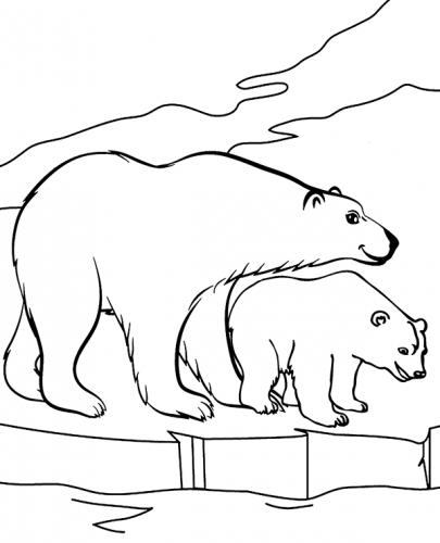 animali orsi