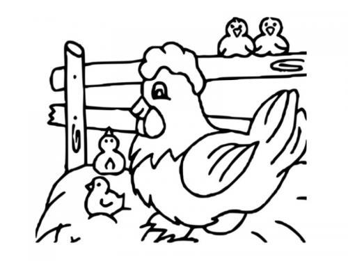 gallina e pulcini