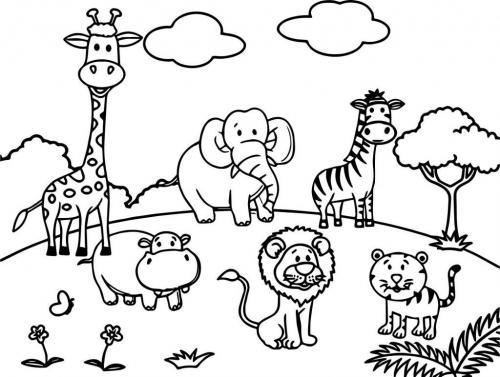 animali zoo