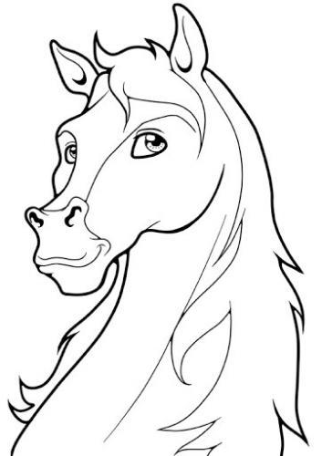 bellissimo cavallo