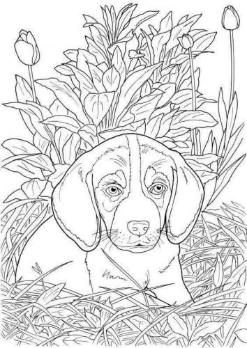 cane da disegno