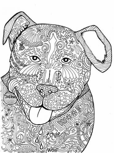 cane disegnare