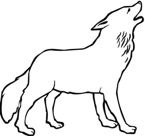 cane lupo disegno