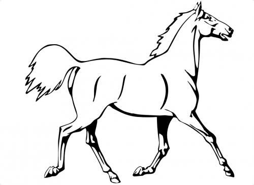 cavalli bellissimi immagini