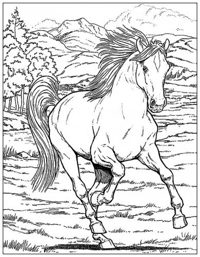 cavalli disegni a matita