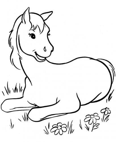 cavalli disegni