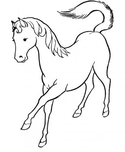 cavalli disegno