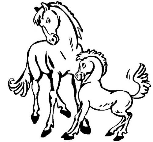 cavallino e cavallo