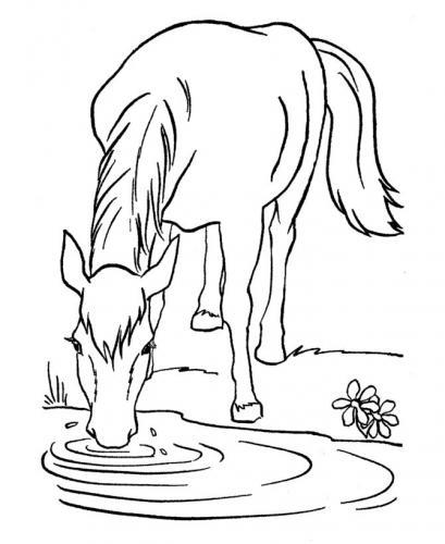 cavallo che beve