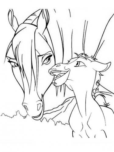 cavallo cucciolo