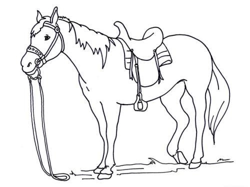 cavallo da disegnare