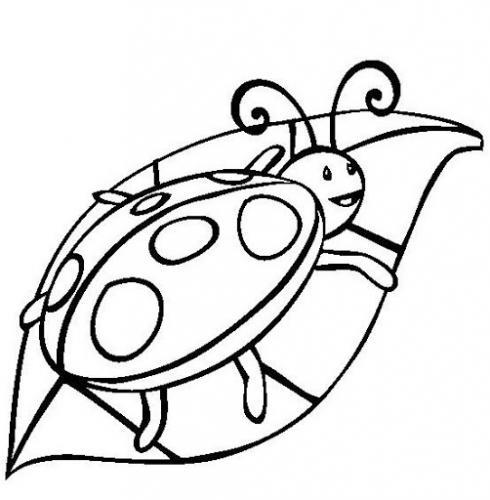 coccinella disegni