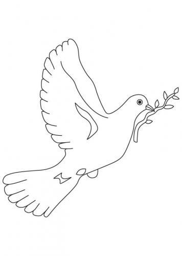 immagine colomba