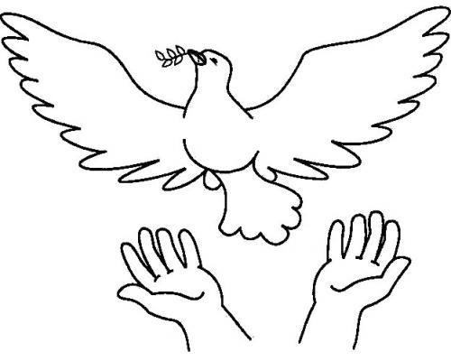 colombe pasquali disegni
