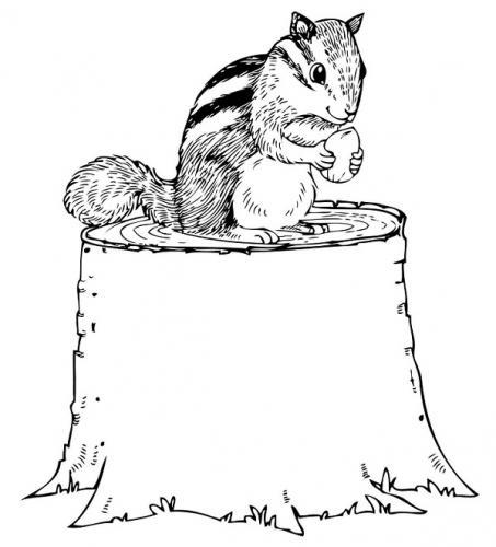 colorare on line scoiattoli
