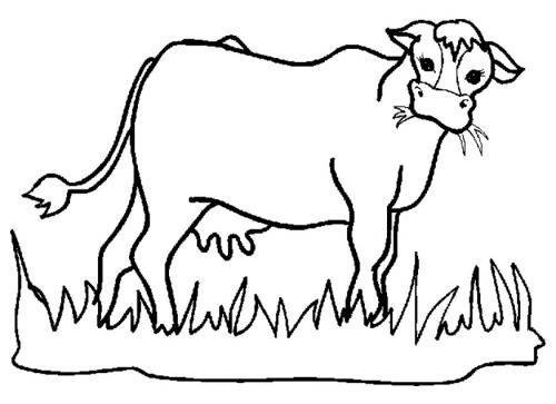 mucca sull'erba