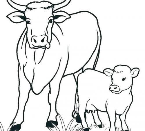 mucca con vitello