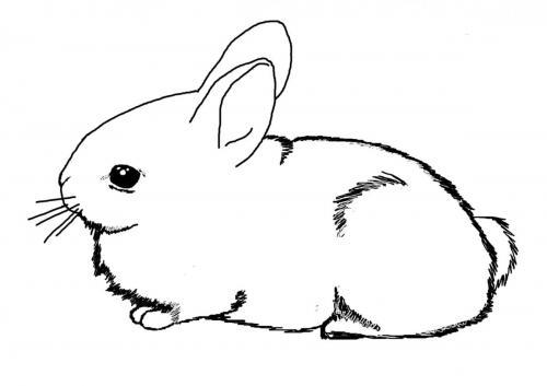 Conigli disegni