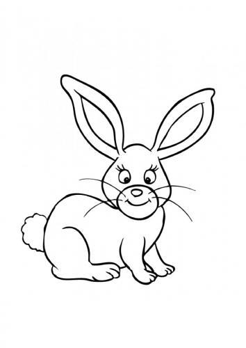 Conigli immagini