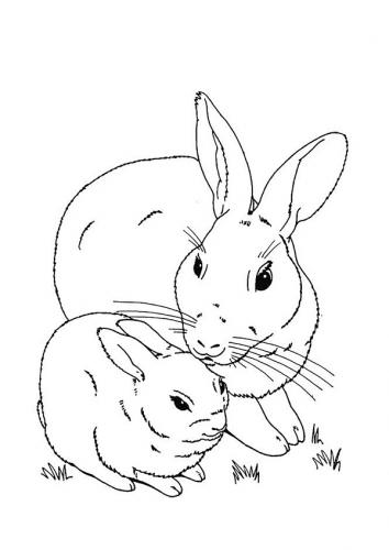 Coniglietto da disegnare