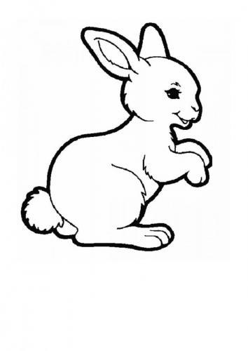 Coniglio da disegnare