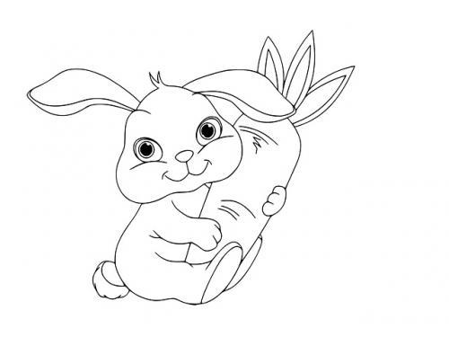 Coniglio immagini