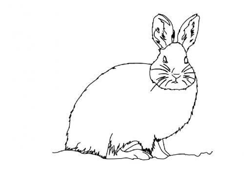 Coniglio immagini da colorare