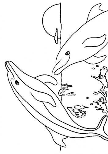 delfini disegni da colorare