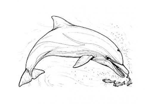 delfini disegni per bambini