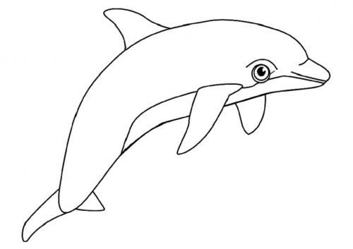 delfini disegni