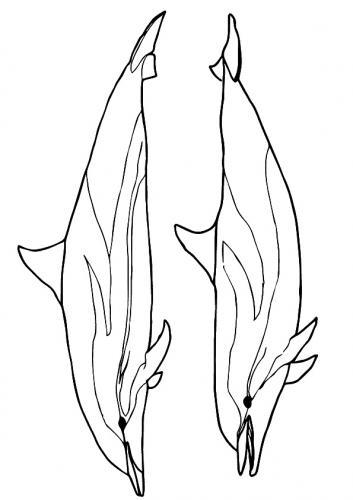delfini immagini da colorare