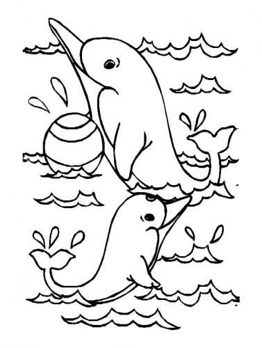 delfini immagini da stampare