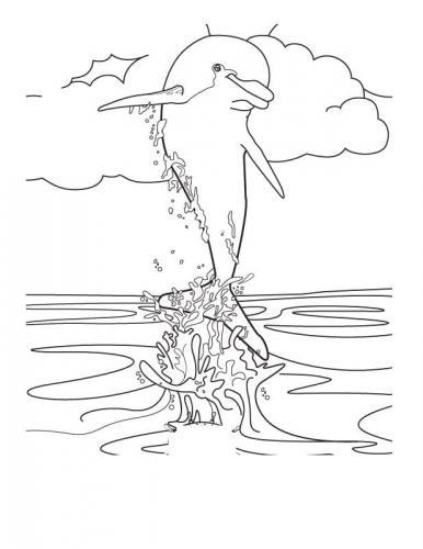 delfino disegno