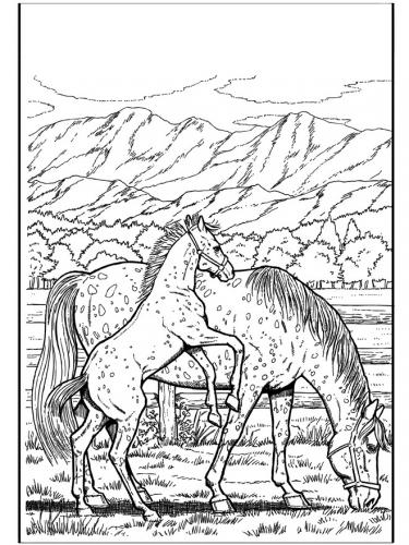 disegna cavalli a matita
