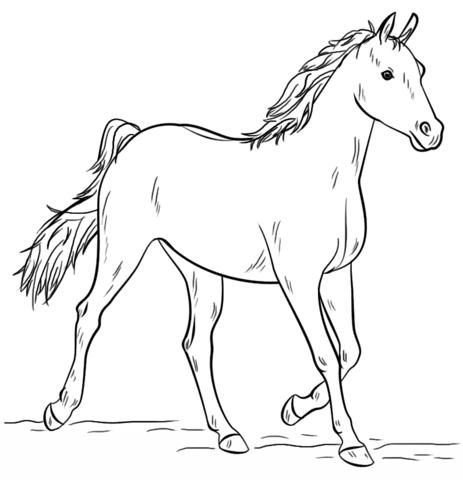 disegna cavalli
