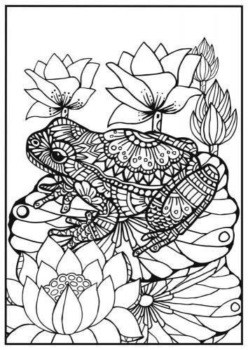 disegna una rana