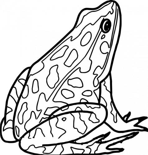 disegnare una rana