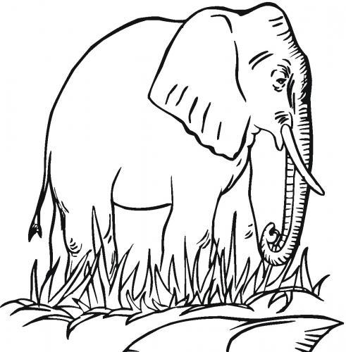 disegni a matita elefante da scaricare