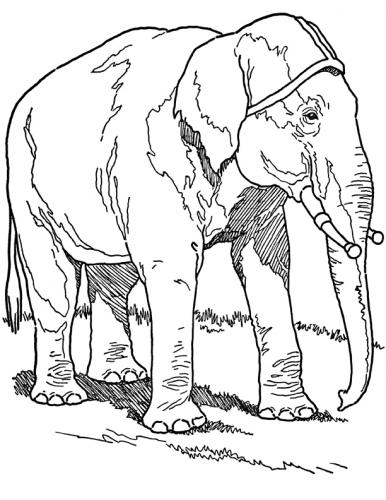 disegni a matita elefante pdf