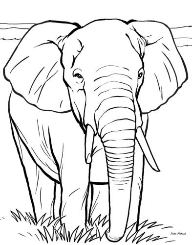 disegni a matita elefante