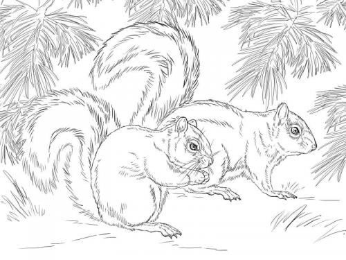 disegni a matita scoiattoli