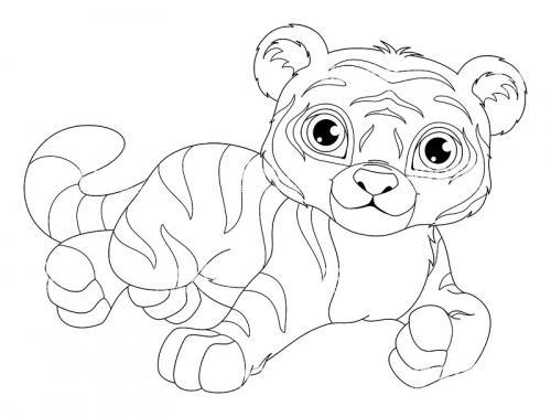 disegni a matite tigre