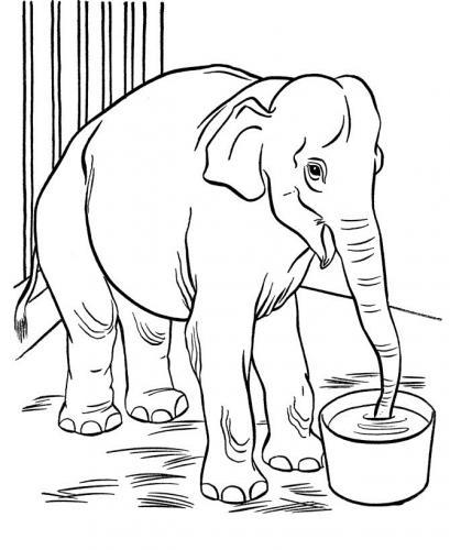 disegni animali elefante